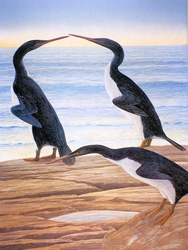 Der Waipara-Riesenpinguin im Vergleich zu einem Kaiserpinguin und einem Menschen, gezeichnet. Bild: Senckenberg
