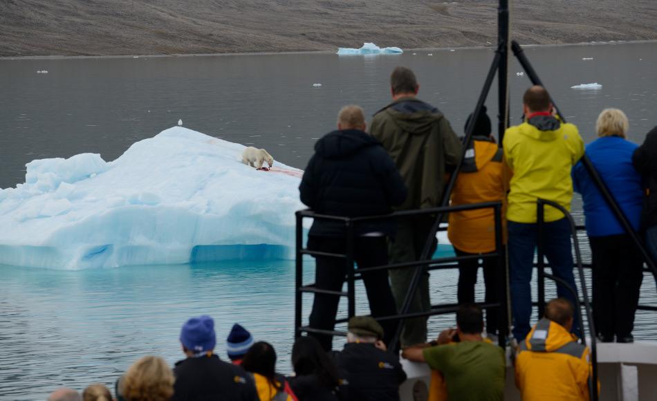 Polartourismus ist in den letzten zehn Jahren stark gewachsen. Dies führt zu grossen Herausforderungen in den polaren Regionen und für die Tourismusindustrie, da die Leute vor allem Natur und Tiere sehen möchten. Bild: Michael Wenger