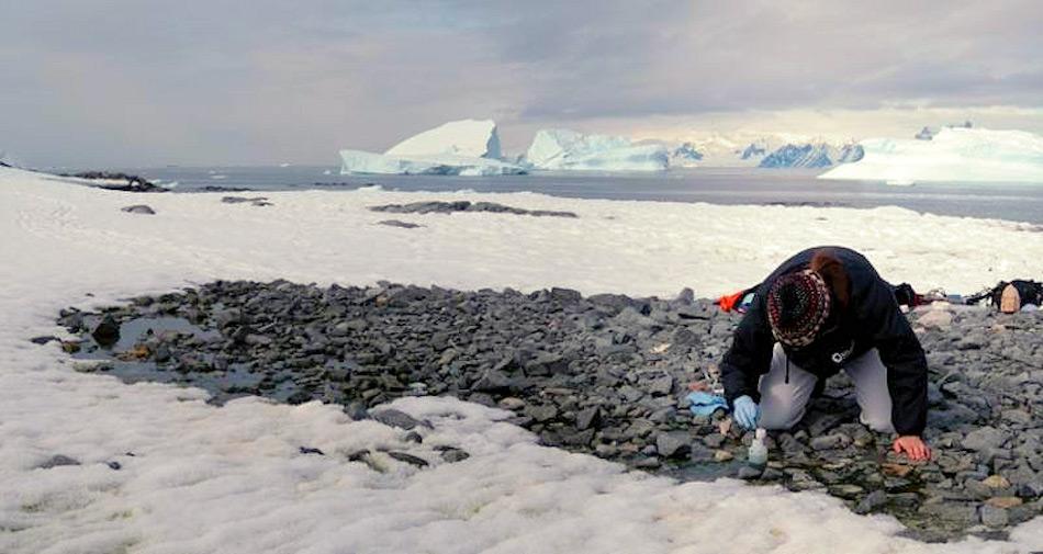 Für die meisten Lebewesen sind die beiden Polarregionen Welten auseinander. Doch einige Mikrobenarten bilden eine Ausnahme und leben an beiden Enden der Welt. Bild: Daniel Farinotti