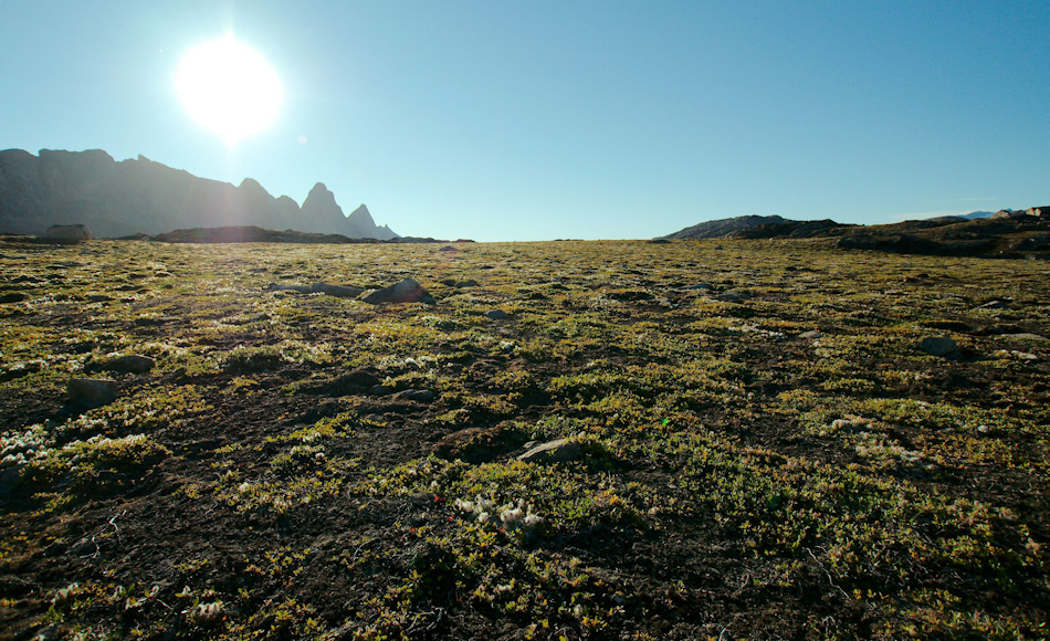 Die arktische Tundra besteht normalerweise aus Büschen, Gräsern, Blumen und Moosen und Flechten. Der Boden ist normalerweise nähstoffarm, besonders arm an Nitraten Doch viele Pflanzen können trotzdem diesen essentiellen Nährstoff wie jeder andere Pflanze aufnehmen. Bild: Michael Wenger