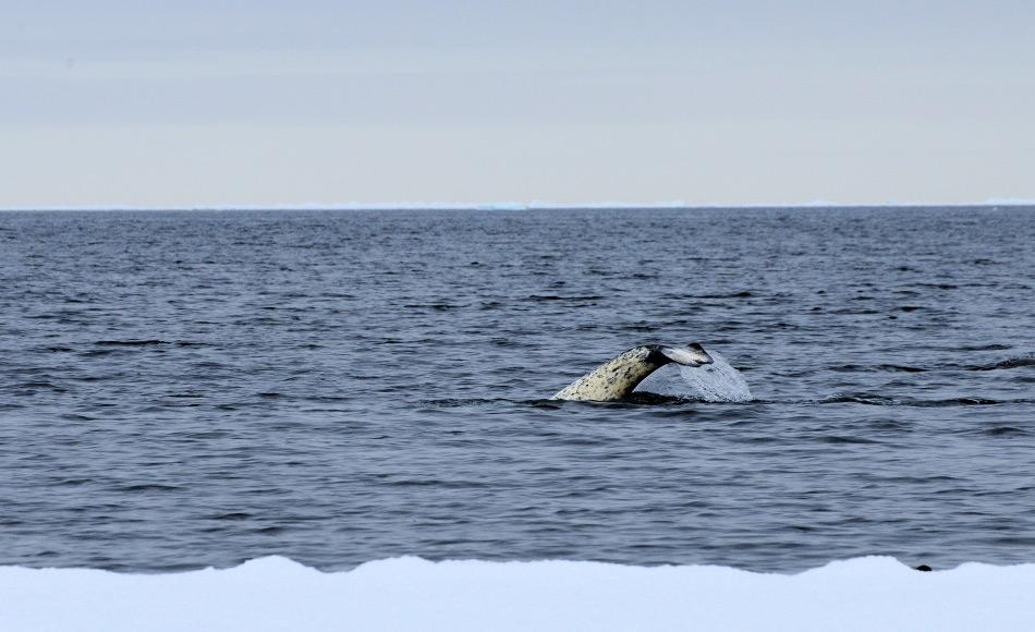 geheimnis der arktis