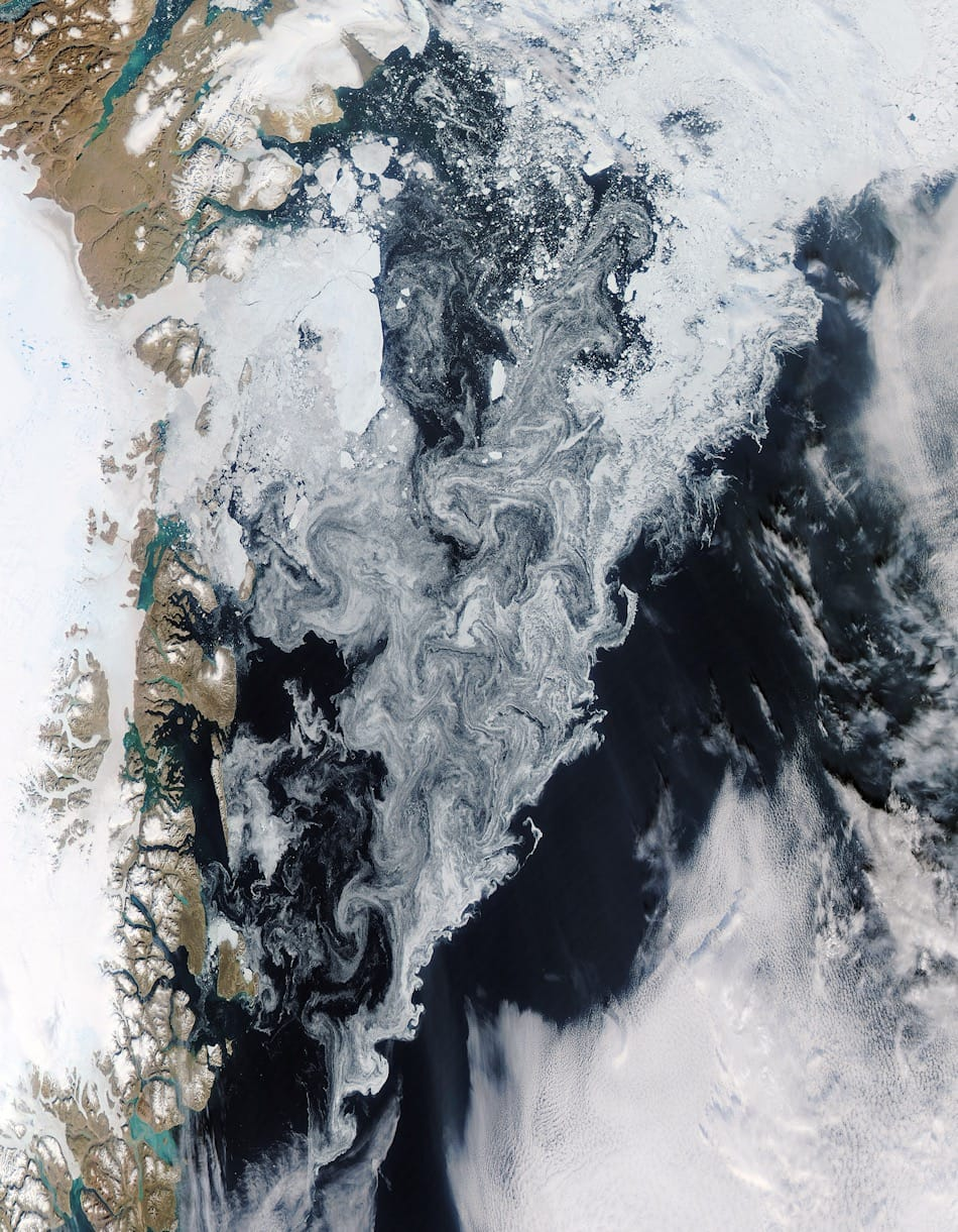 Angetrieben vor allem durch den Ostgrönlandstrom sind weite Teile der Grönlandsee von Eis bedeckt, besonders im Norden und an der Ostküste Grönlands. Dadurch ist der Blick auf das Leben unter dem Eis auch für Satelliten verborgen. Bild: Aqua/MODIS – NASA worldview