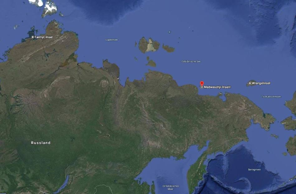 Die Medweschij-Inseln gehören zu den wichtigsten Geburtsorte für Eisbären. (Bild: Google Maps)