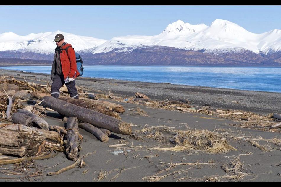 Robb Kaler von der US Fischerei und Wildtierbehörde sucht nach toten Vögeln bei Hallo Bay im Katmai Nationalpark, westlich von Anchorage. Bild: Stacia Backenstoss, National Park Service via APP