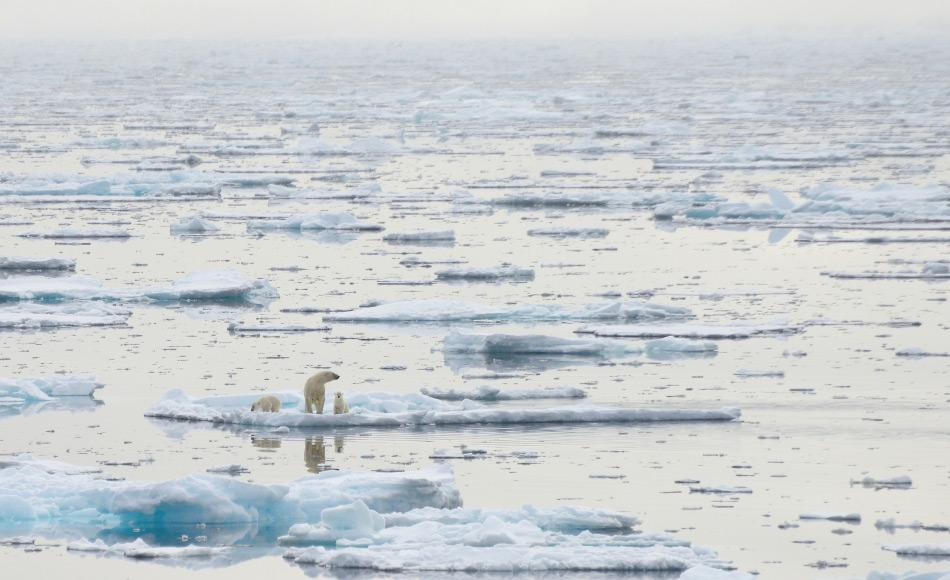 Das arktische Meereis ist der wichtigste Faktor für die Ökologie der Arktis und ihrer Bewohner. Ohne Meereis finden Eisbären, Robben und alle anderen Arktisbewohner weder Nahrung noch Lebensraum. Und das Meereis wird immer weniger. Bild Michael Wenger