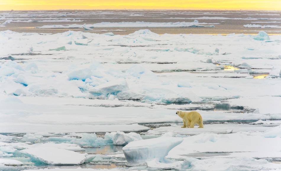 Das arktische Meereis ist nicht nur wichtig für das Klima der Erde, sondern ist auch ein wichtiges Ökosystem. Alles Leben in der Arktis hängt vom Meereis ab. Dies umfasst Organismen wie Phytoplankton, Zooplankton, Fische und Meeressäuger, aber auch Vögel, Landtiere, Pflanzen und Menschen.